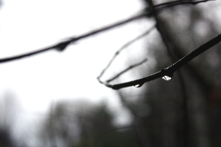 delicate rain, reflecting the light as it slides from iy's branch replaced by another